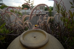 Fountain and purple grass